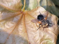 img_2908fly_2